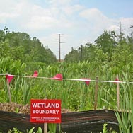 Wetlands Delineation & Permitting